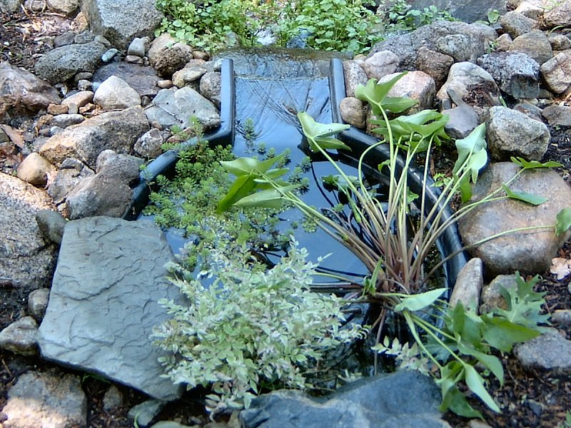 The kester house garden garden pond for Best pond plants for filtering